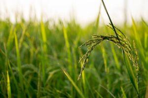 父が所有する農地の相続の場合は登記には農地法の許可が必要?